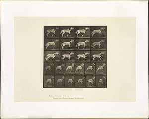 Animal locomotion. Plate 572