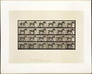 Animal locomotion. Plate 574