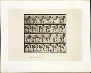 Animal locomotion. Plate 575