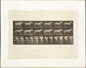 Animal locomotion. Plate 576
