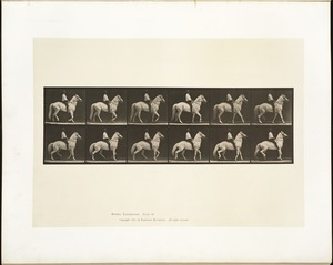 Animal locomotion. Plate 577