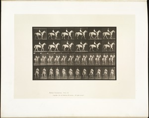 Animal locomotion. Plate 579