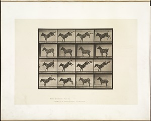 Animal locomotion. Plate 658