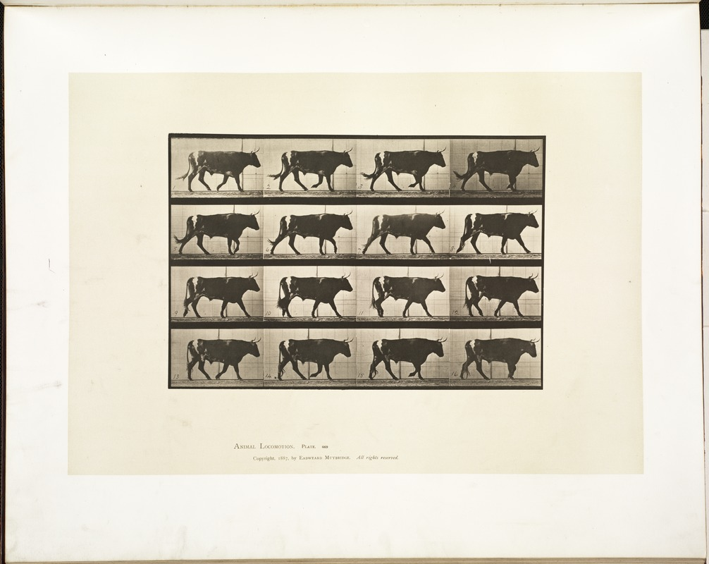 Animal locomotion. Plate 669