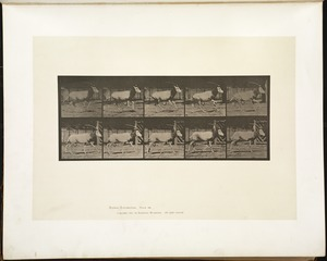 Animal locomotion. Plate 680