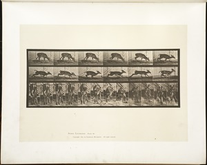 Animal locomotion. Plate 681