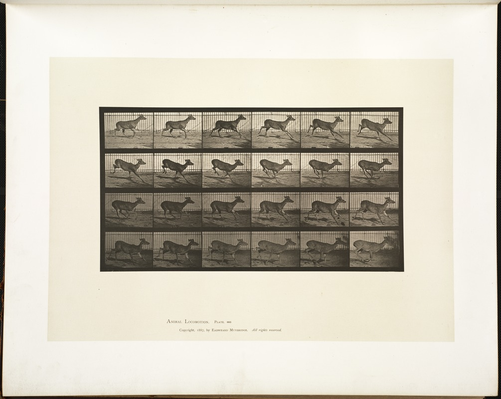 Animal locomotion. Plate 683