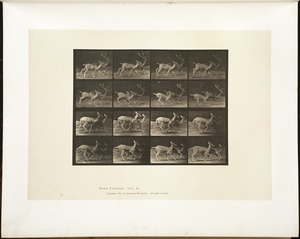 Animal locomotion. Plate 684