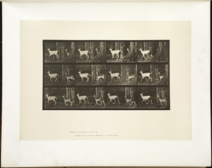 Animal locomotion. Plate 685