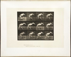 Animal locomotion. Plate 774