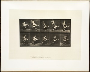 Animal locomotion. Plate 775