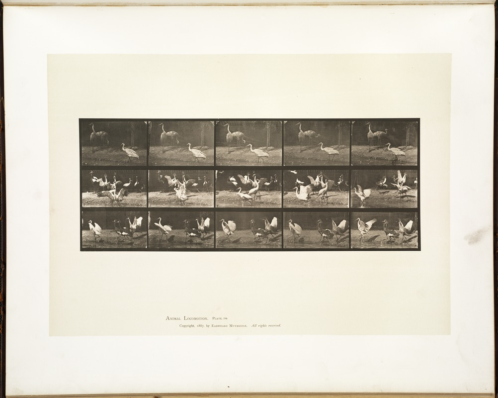 Animal locomotion. Plate 778