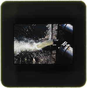 Discharge pipe, various angles of fish spilling from discharge pipe