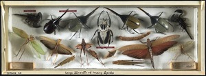 Large insects of many lands