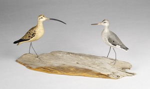 Whimbrel ; Willet