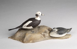 Long-tailed duck (pair)