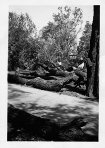 Hurricane of 1938 damage.