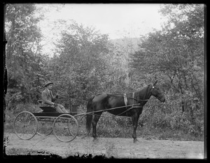 Man driving horse & 4 wheeled buggy