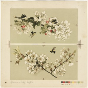 Apple-Blossoms and Bees / Cherry Blossoms and Bees