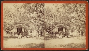 Unidentified men with horse and buggy. American views