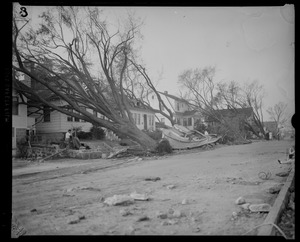 Trees uprooted, Hurricane of 38