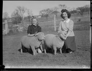 Girls with sheep, Massachusetts Agricultural College