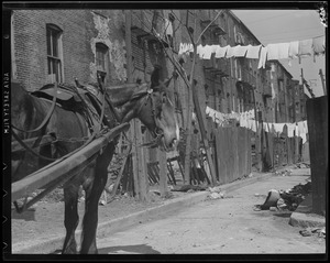 Horse drawn P.W.D. cart collecting garbage in the South End