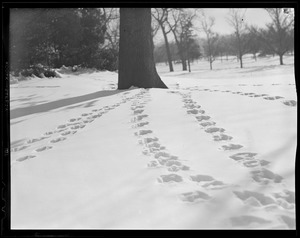 Tracks in snow at Franklin Park