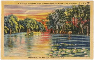 A beautiful Southern scene, Cypress Trees and Water Lilies at sunset, Greenfield Lake and Park, Wilmington, N. C.