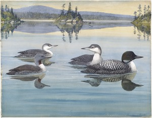 Panel 2: Red-throated Loon, Loon