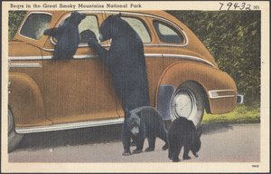 Bears in the Great Smoky Mountains National Park