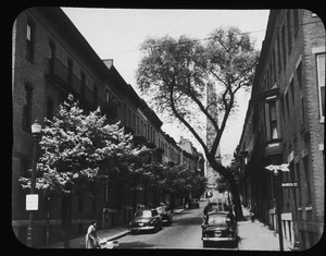 New Norway maple trees and the last of the big elms on Monument Avenue. 1952