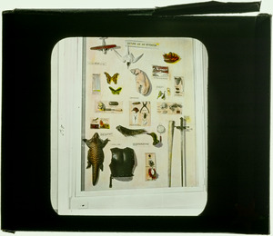 144 Nature as an Inventor display case
