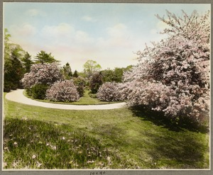 Apple blossom tree and flowers, Sargent estate
