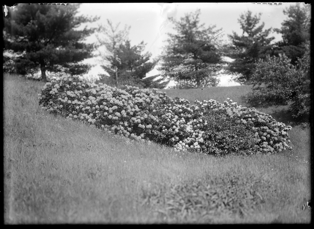 Flowers, side hill, Forest Park