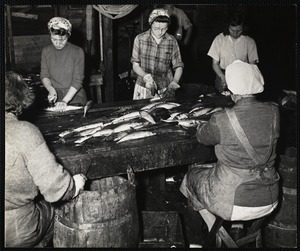 Cleaning + cutting mackerel for canning - New Harbor, Me