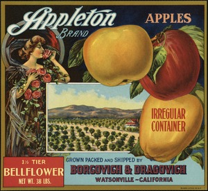 Appleton Brand apples: Irregular container, grown packed and shipped by Borgovich & Dragovich, Watsonville, California