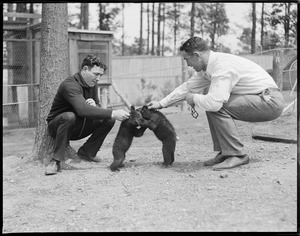 Fighters, Hambone Kelley and Maloney with young bears also fighting