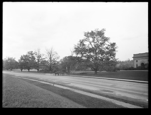 Distribution Department, Chestnut Hill Reservoir, work on English Elm trees along Beacon Street; looking towards Chestnut Hill Low Service Pumping Station; trimming, Brighton, Mass., Nov. 1920-1921