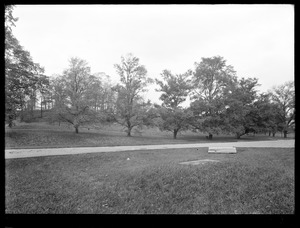 Distribution Department, Chestnut Hill Reservoir, work on English Elm trees along Beacon Street; vicinity of Chestnut Hill Pumping Stations?, Brighton, Mass., Nov. 1920-1921