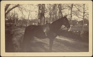Ashdale Farm. Saddled horse on dirt road; stone walls and trees; white houses in distance