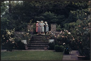 Ashdale Farm. View of Rose Garden in bloom; group of women at top of stairs