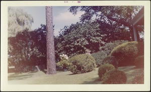 View of sloping lawn; trees; corner of back porch