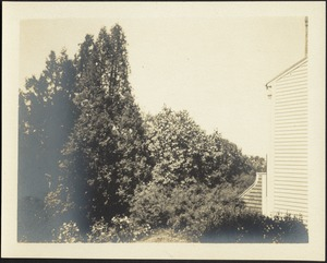 View of trees and back of house