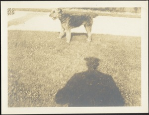 Dog on lawn; shadow of man with hat