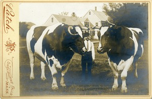 J.D. Avery with 2 oxen and house, photograph, Buckland Mass.