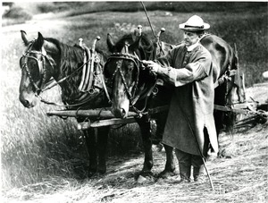 Calvin Coolidge and horses