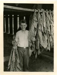 Calvin Coolidge, Jr. and tobacco leaves