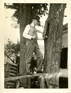 Calvin Coolidge preserving a tree