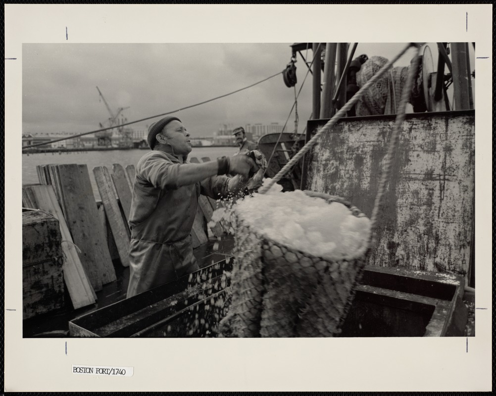 Unloading fish from a vessel at Boston's Fish Pier